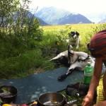 Kochen mit Tieren