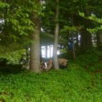 Traumhaft saftig grünes Lager Plätzchen