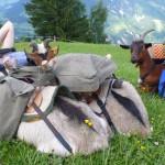 oberhalb Seelisberg sind wir alle mit Sack und Pack ins grün gesackt